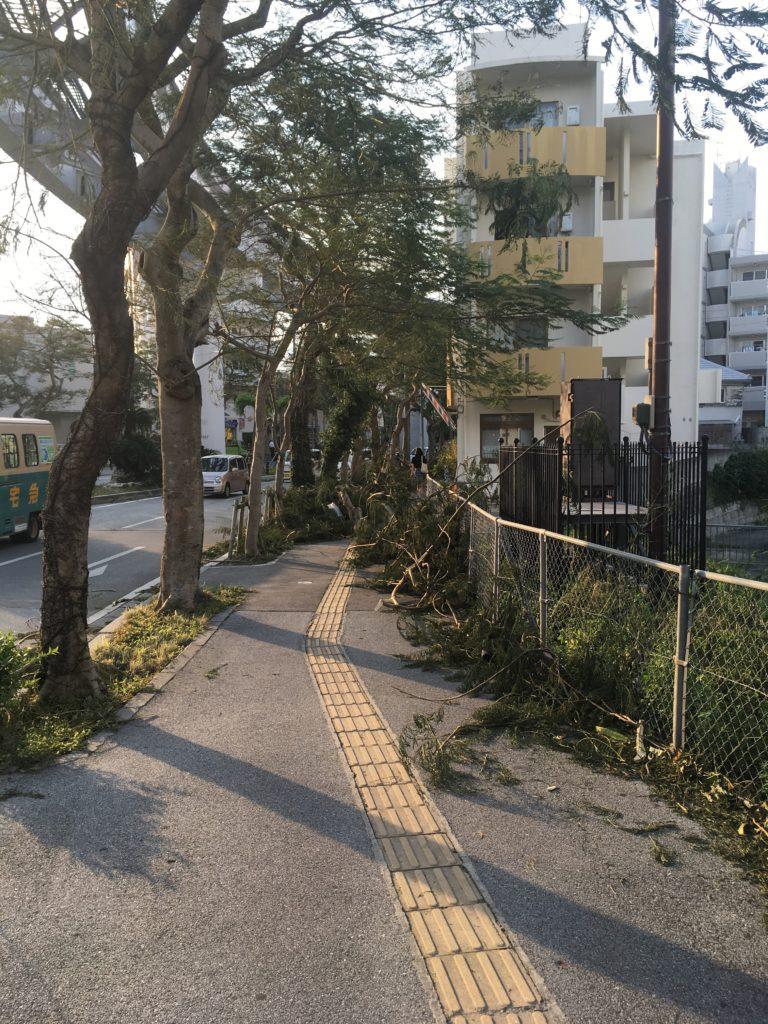 台風24号後の街路樹